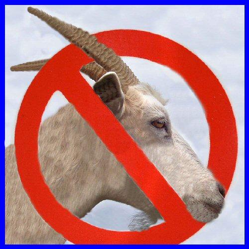 no-goat-500